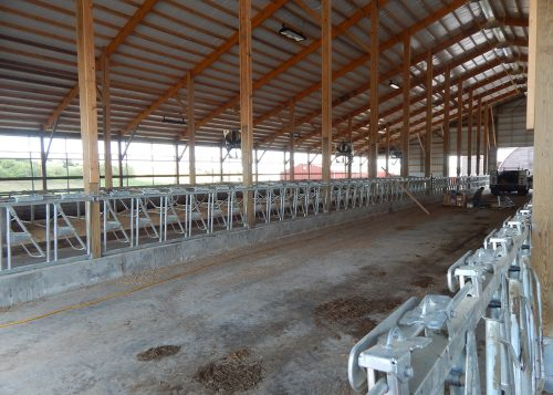 Concrete floor in large cattle barn